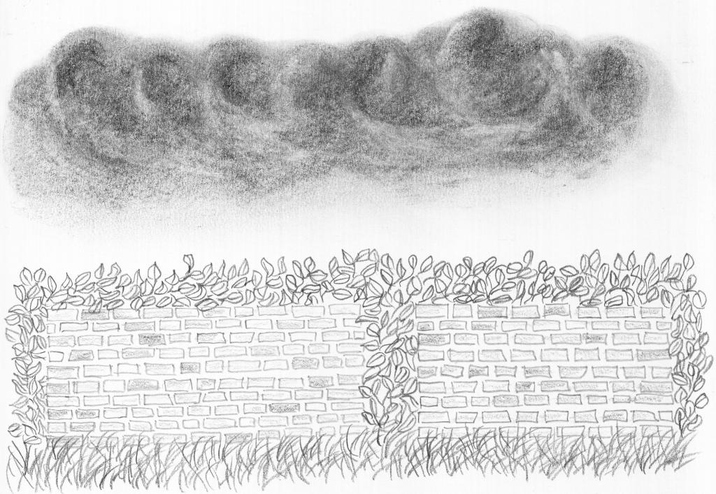 WolkenMauerBlätterGras