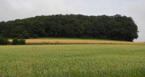 Allerlei Getreide