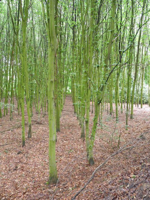 Auch im Teutoburger Wald muss Ordnung sein.