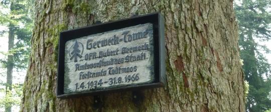 Die Gerweck-Tanne.