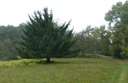 Seltsamer Baum auf dem Scheuerberg.