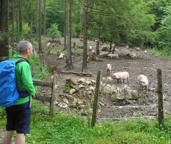 Schweinerei (vorne und hinten).